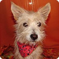 Adopt A Pet :: DOC - Hurricane, UT