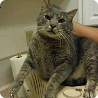 Adopt A Pet :: A565621 - Oroville, CA