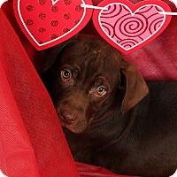 Adopt A Pet :: Talbot - St. Louis, MO