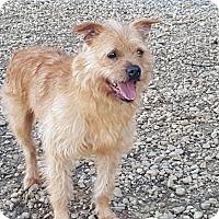 Adopt A Pet :: Dexter (ETAA) - Spring Valley, NY