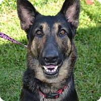 Adopt A Pet :: Clyde - Miami, FL