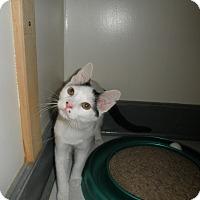 Adopt A Pet :: Presley - Milwaukee, WI