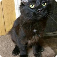 Adopt A Pet :: Merry - Morganton, NC