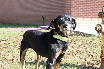 Doberman Pinscher Mix Dog for adoption in Dawson, Georgia - Kitty