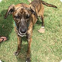 Adopt A Pet :: Marley  (ETAA) - Harrisonburg, VA