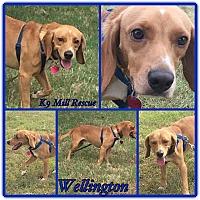 Adopt A Pet :: Wellington - Hurst, TX