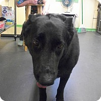 Adopt A Pet :: Molly - Picayune, MS