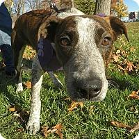 Adopt A Pet :: Homer - Detroit, MI