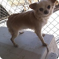 Adopt A Pet :: Carmela - Bonifay, FL