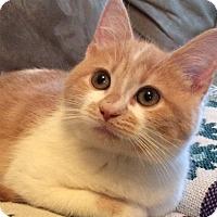 Adopt A Pet :: Rowan - Carlisle, PA