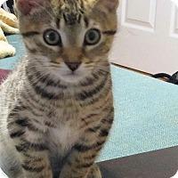 Adopt A Pet :: Ocean - Toronto, ON