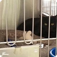 Adopt A Pet :: Jenny - Montgomery City, MO