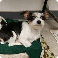 Adopt A Pet :: Gigi - Los Banos, CA