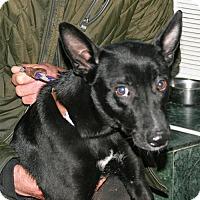 Adopt A Pet :: CUTTY - NYC, NY