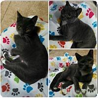 Adopt A Pet :: Tipsy - Brandon, FL