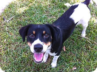 Adopted Dog | Austin, TX | Australian Shepherd/Border Collie Mix