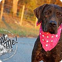 Adopt A Pet :: Ruby - Albany, NY