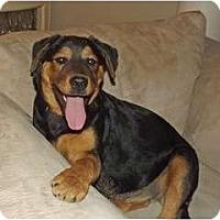 Adopt A Pet :: Madeleine - Phoenix, AZ
