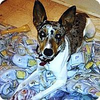 Adopt A Pet :: Razzy - Richmond, VA