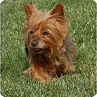 Adopt A Pet :: Roxie - Charlotte, NC
