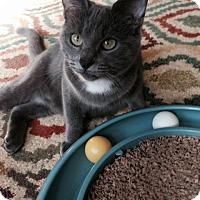 Adopt A Pet :: Dean - Stafford, VA