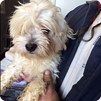 Adopt A Pet :: Micah - Elk Grove, CA