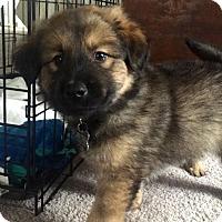 Adopt A Pet :: Caster-Adopted! - Detroit, MI