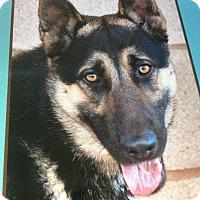 Adopt A Pet :: HEINRICH VON HIMMEL - Los Angeles, CA
