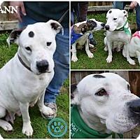 Adopt A Pet :: Breann - Kimberton, PA