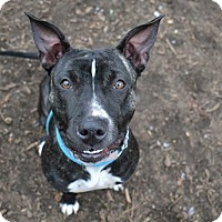 Adopt A Pet :: Peeps - Brookhaven, NY