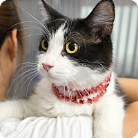 Adopt A Pet :: Mitsy - Montclair, CA