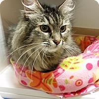 Adopt A Pet :: Pia Zadora - Chula Vista, CA