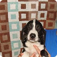 Adopt A Pet :: Raven - Oviedo, FL