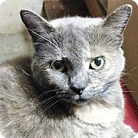 Adopt A Pet :: Georgia - Germantown, MD