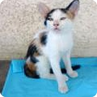 Adopt A Pet :: Zoe - Mission Viejo, CA