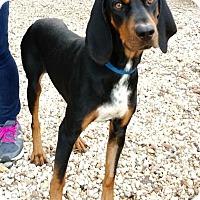 Black and Tan Coonhound Mix Dog for adoption in Charelston, South Carolina - Matthew