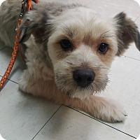 Adopt A Pet :: Luke - Fullerton, CA