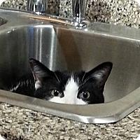 Adopt A Pet :: Kory - THORNHILL, ON