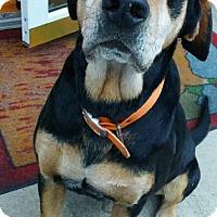 Adopt A Pet :: Colonel - Irmo, SC