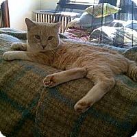Adopt A Pet :: Marty - St. Louis, MO