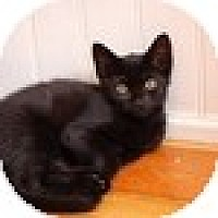 Adopt A Pet :: Flynn - Vancouver, BC