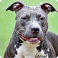 Adopt A Pet :: Cherry Bomb - Orlando, FL