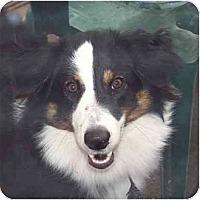 Adopt A Pet :: Phoebe - Orlando, FL