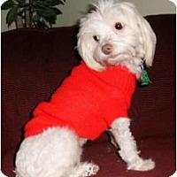 Adopt A Pet :: Nala - Mooy, AL