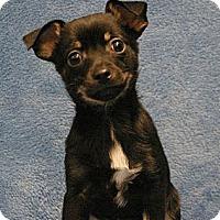 Adopt A Pet :: Chub - Sacramento, CA