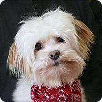 Adopt A Pet :: Alden - Mooy, AL