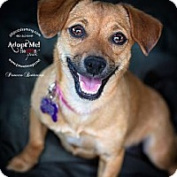 Adopt A Pet :: PRINCESS BUTTERCUP - Phoenix, AZ