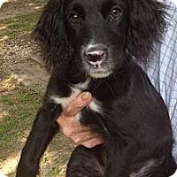 Adopt A Pet :: Tyke - Sugarland, TX