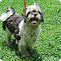 Adopt A Pet :: Gus - Vancleave, MS