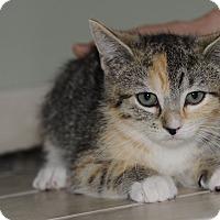 Adopt A Pet :: Cedar 2 - Plainville, MA